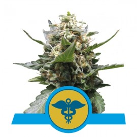 Royal Medic CBD Royal Queen Seeds 3 semi femminizzati