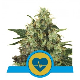 Medical Mass CBD Royal Queen Seeds 3 semi femminizzati