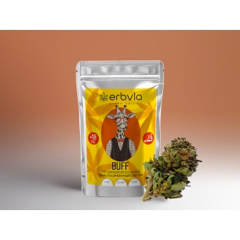Buff qualità Lemon Haze 2.5 gr Erbula