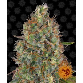 Sweet Tooth Auto Barney's Farm 3 semi femminizzati